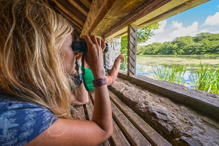 Birdwatching at Bosherston lily ponds